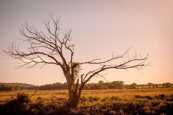 Baker Wetlands in Lawrence KS