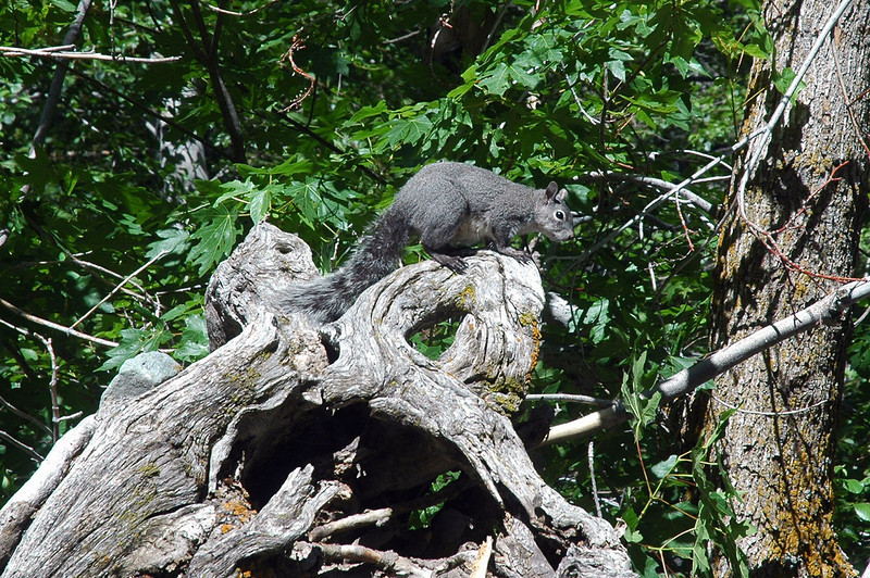 One of the many gray squirrels I saw on the hike.