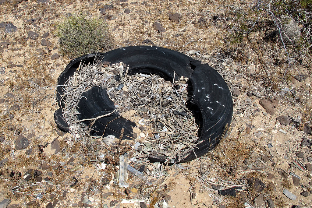 Judging by the large size, I think that this tire is from one of the main gears. The desert packrats have made a home from it.