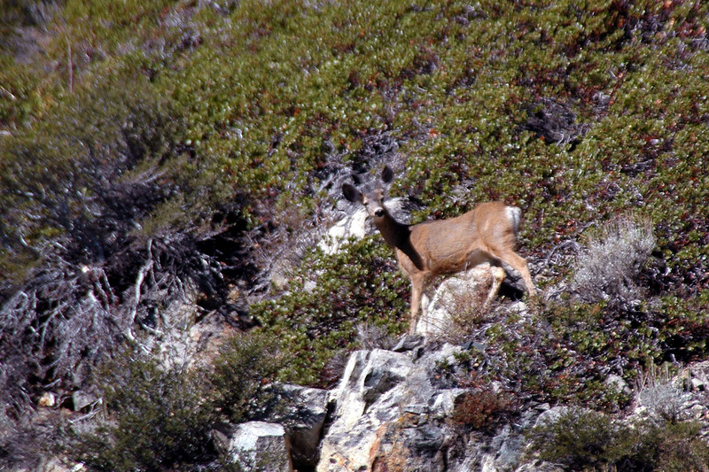 One of the four deer we saw on the hike. This shot also shows how steep the slope is.