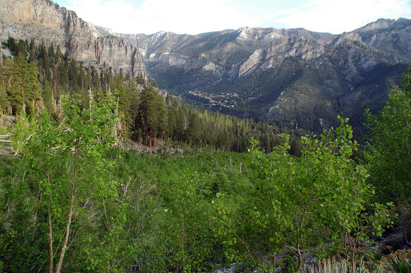 Looking back down into Kyle Canyon after hiking about one and half miles. We'll be starting up the switchbacks soon.