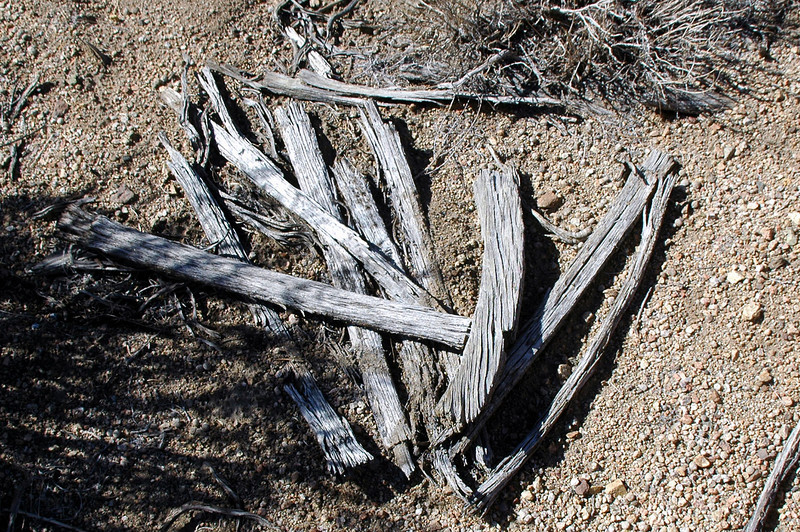 Tom has good eyes, when I saw this it looked like a pile of old sticks to me. He saw it for what it is which is the remains of an old wagon wheel. The sticks are the spokes, one has a section of the wheel on it.