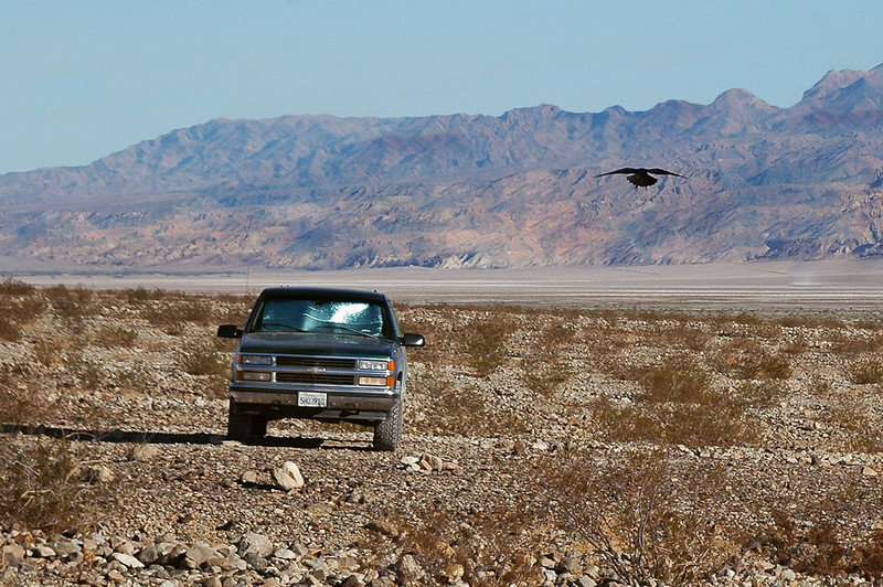 As I started off, I looked back to the truck and saw a big raven flying straight at me.