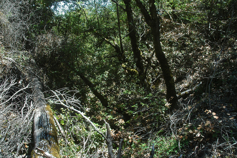 I decided to hike down a little gully that looked fairly clear at the top, but it soon became overgrown. The bad thing about that was there was some poison oak scattered in the area along with it being a hot and humid day.
