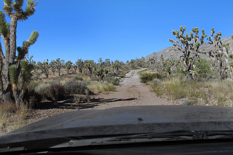 Driving in the Mojave National Preserve. About a year ago I saw a post about a group of folks that visited this site, looked interesting so put on my to do list. I was given it's location, but somehow I misplaced the information. I remembered where the hike started and had a good idea which area the crash site was located in.