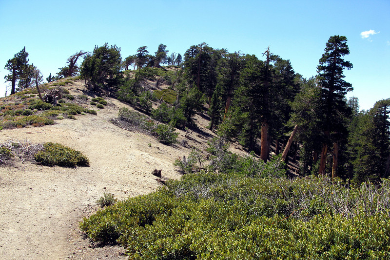 Back up on the ridge. This is the place the Cirrus crossed the ridge, hitting the trees on the right.