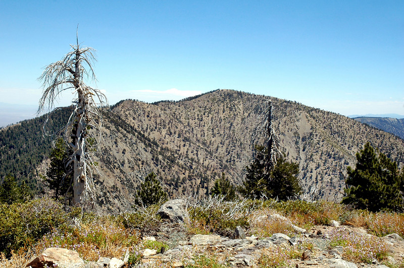 Mount Burnham on the left and Mount Baden-Powell on the right from Throop Peak.