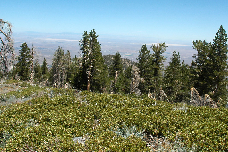 View to the north from Throop Peak at 9138 feet. The two lake beds are Rosamond and Rogers at Edwards Air Force Base.