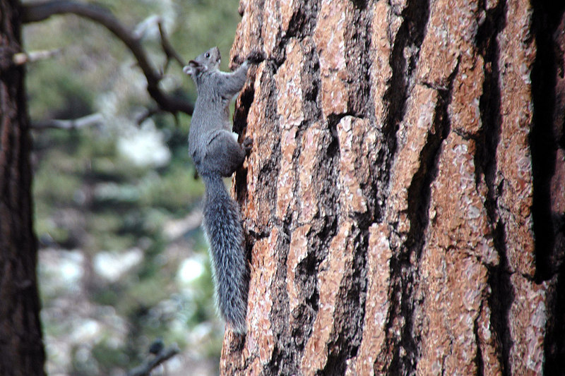 Gray squirrel. Saw a lot of different animals while doing this hike.