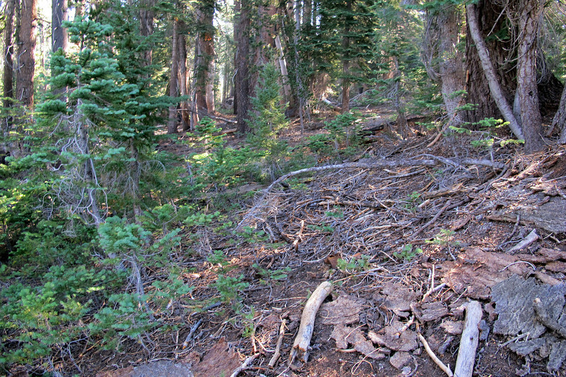 The final part of the hike to the crash site is off trail.