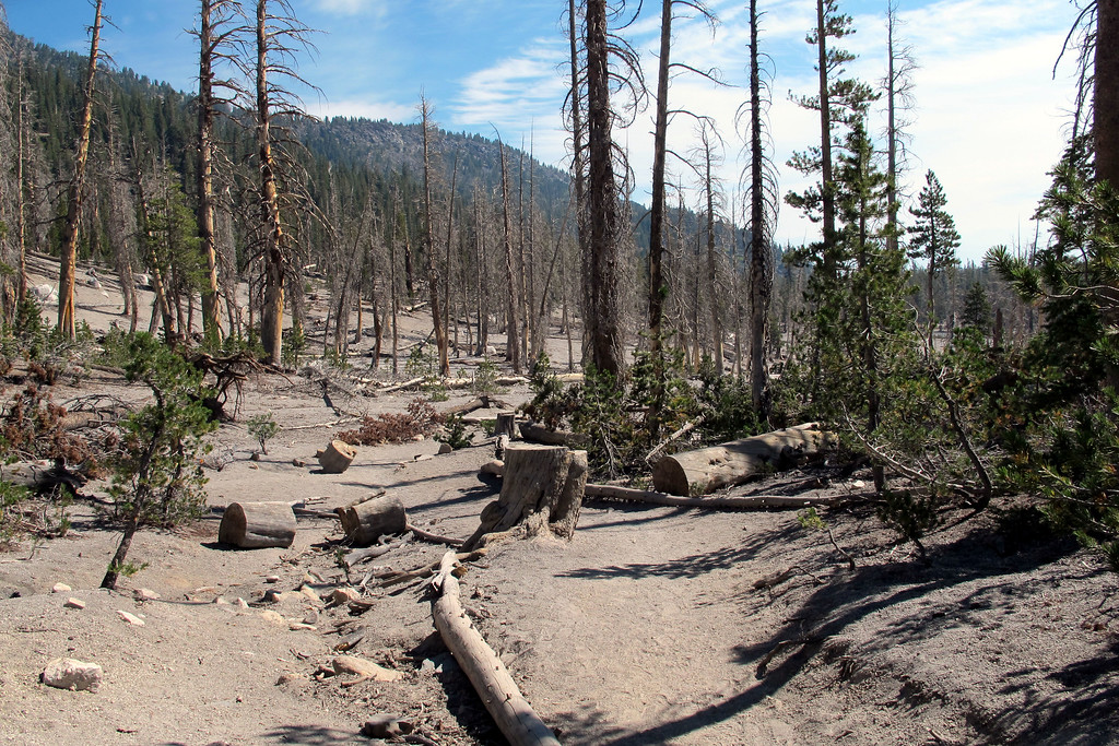 When I started seeing the dead trees, knew that I was nearing the end of the hike.