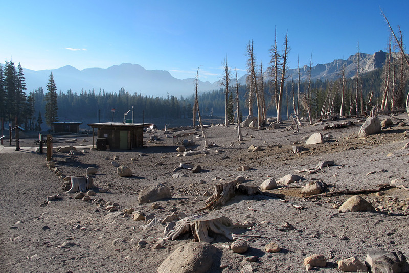The dead trees at Horseshoe Lake that were kill by the CO2 seeping up from the ground.