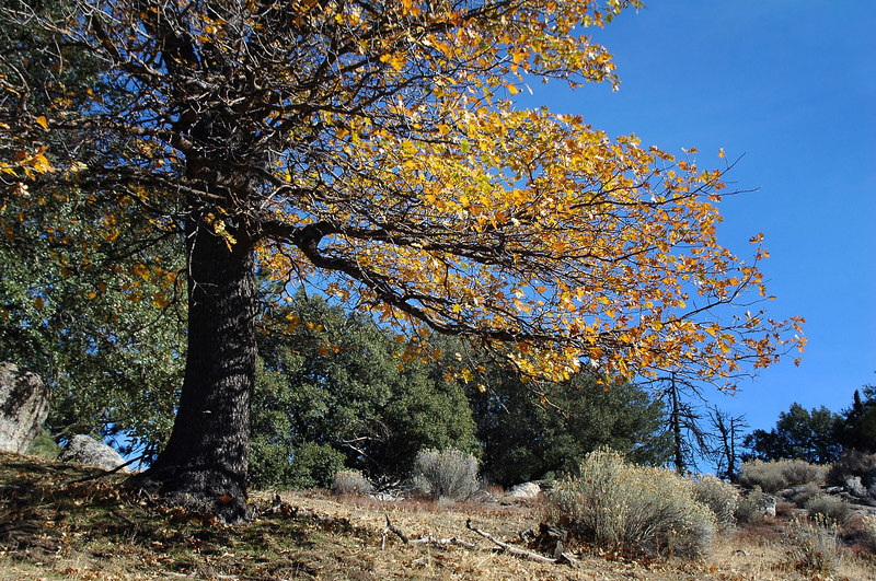 Some of the trees in the area still had their fall colors.
