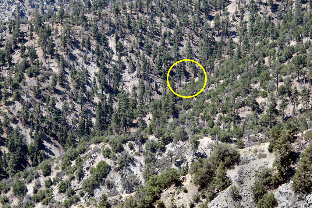 From the area that I found the balloon, I used a pair 10X50 binoculars to scan the area and something white caught my eye. I wasn't sure that it was the Mooney, but it definitely looked like aircraft wreckage. Problem was that it was about a mile away and there was a steep 1000 foot deep canyon between me and it. Have to find another way to approach it.