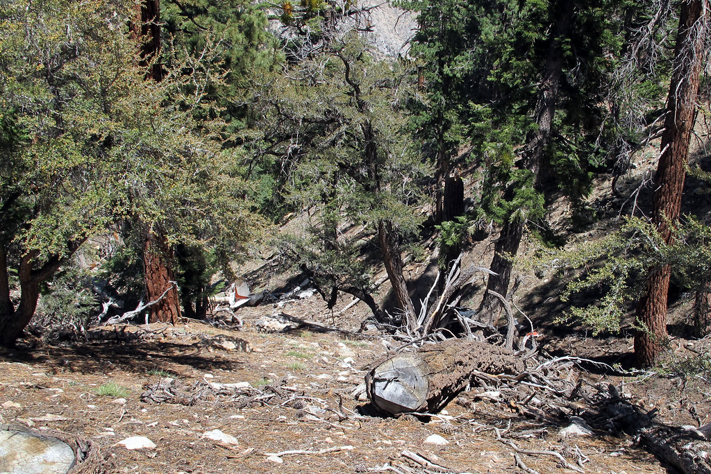 It took a while, but I sure was happy when I spotted the wreckage. I got a little disorientated while driving around and wasn't sure which canyon it was in. Found it in the second one I checked. Good thing I got an early start and it gets dark late these days.