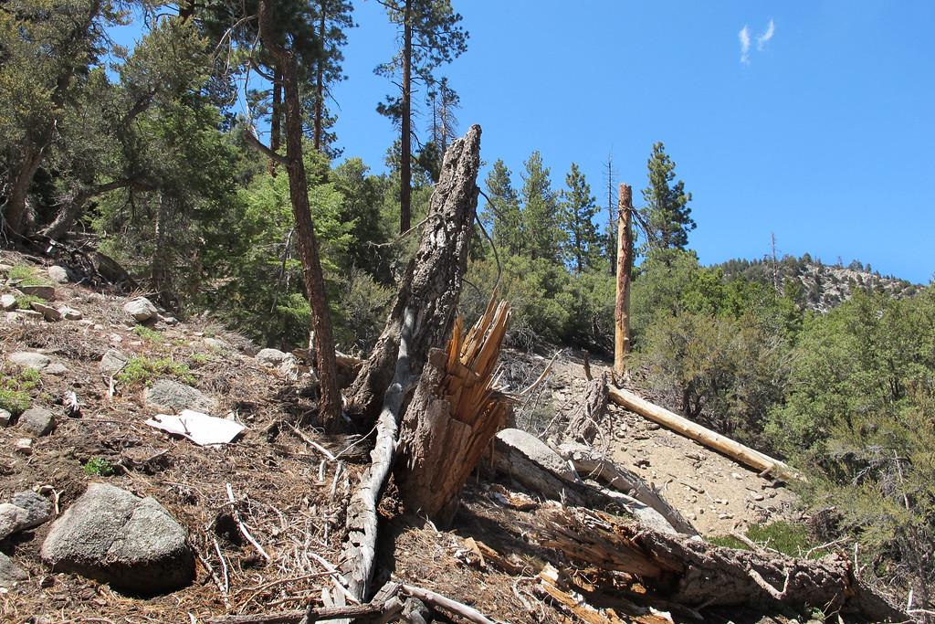 Broken trees near the center of the debris field.