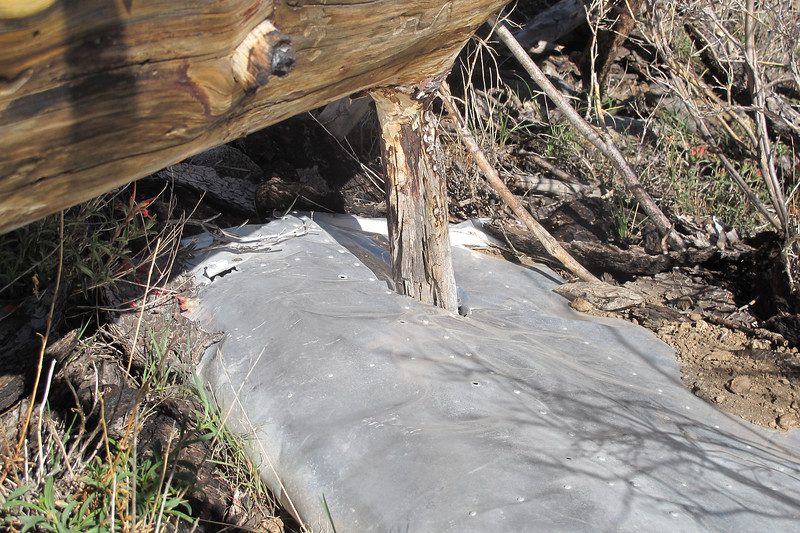 Close up of the same flap showing where a fallen tree punctured a hole into it.