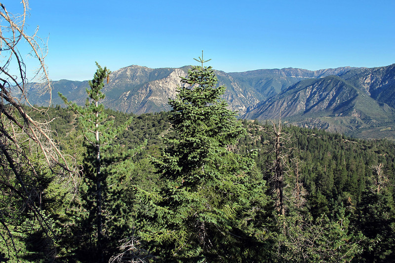 View from the trail as I gain some altitude. The newspaper articles stated that the plane crashed into a forested area.