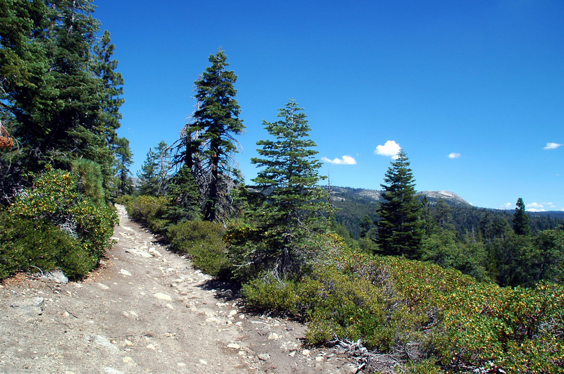 The hike started out on a old road.