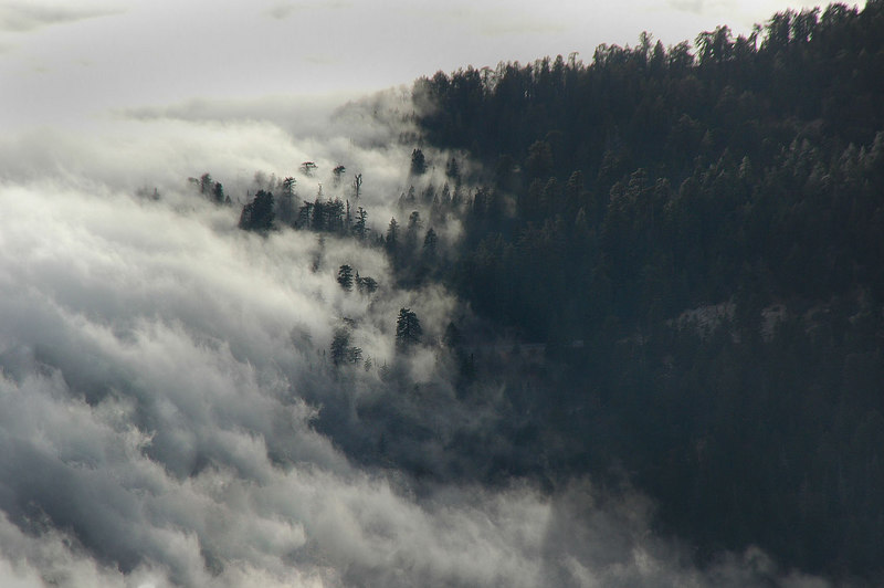Zoomed in on the clouds flowing through the trees. Looked better in real life.
