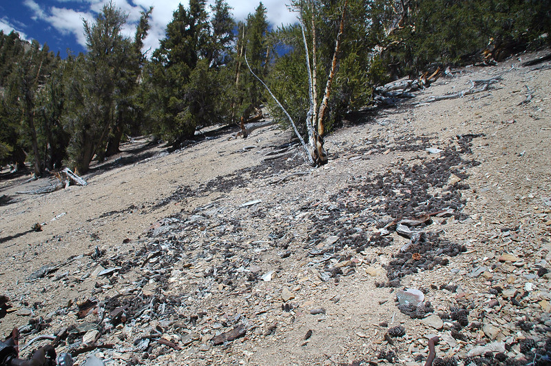 The spot at the base of the burned dead tree looks like where the plane first came to rest. There was a lot of small pieces in that area.