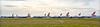British Airways Fleet at Glasgow Airport - 23 March 2020