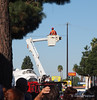 Tree trimming takes center stage as Endeavour travels city streets to get to the California Science Center in Los Angeles.