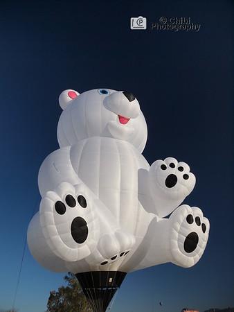 2020 Havasu Balloon Festival, Bila Bear