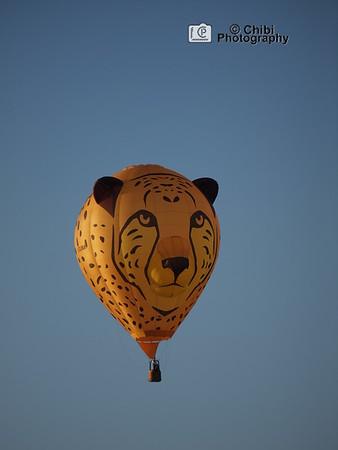 2020 Havasu Balloon Festival, Duma the Cheetah