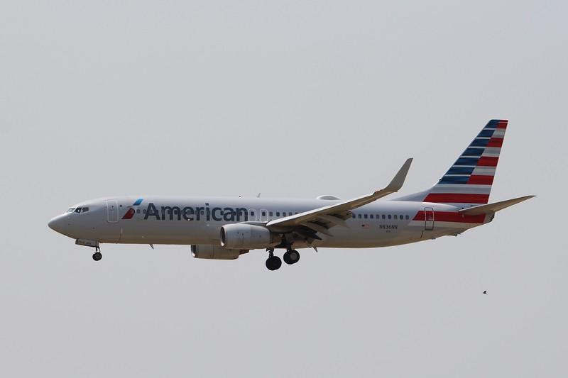 American Airlines (AA) N836NN B737-823 [cn31095]