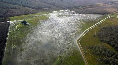 A very wet field
