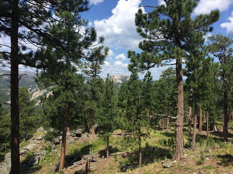Mt. Rushmore in the far distance.