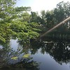Very peaceful at the pond by the Nature Center.