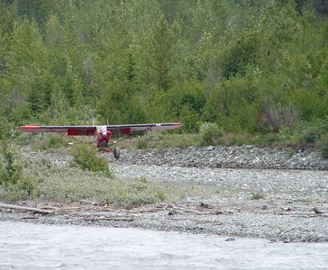 On a small gravel island in the Matanuska River just below the mouth of the Chickaloon River, this PA-18 is just touching down on the rocky surface.  The huge tundra tires are a definite asset in this kind of work.