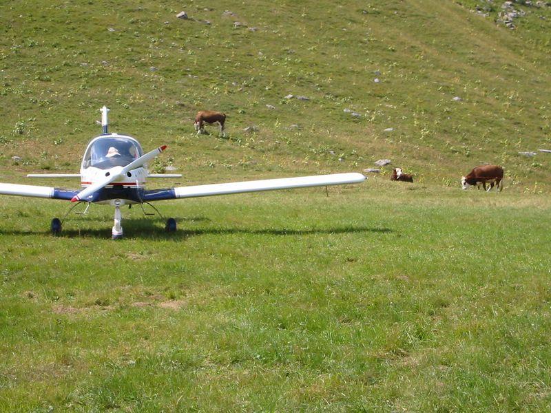 zona parking aviones y vacas