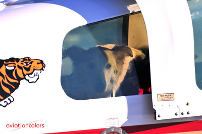 Animal Rescue Flights - Frederick, MD - 11/7/2009 - Heading to his new home.  - www.animalrescueflights.org