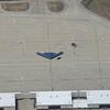 B-2 Stealth bomber at Whiteman Airforce Base, central Missouri