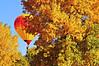 DJRI_copyright_2011-10-16@08-09-56