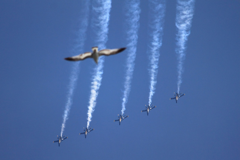 When Birds Dream...