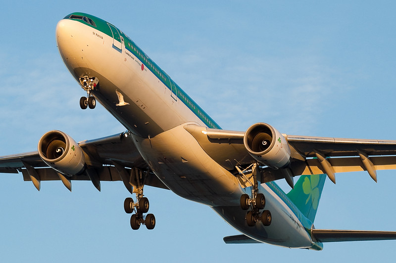 This Aer Lingus Airbus is in no real danger from the seagull - it's just a trick of perspective.