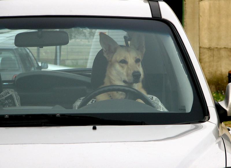 asi da gusto atento a la conducion