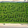 2013 Corn Maze*