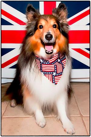 Miller - An American Dog - Living An English Life...