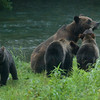 """""""Monica"""" and her three cubs at around 5:30 a.m."""