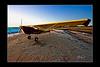 ~Beach Beauty~<br /> Kitfox graces Fort DeSoto Beach at Sunrise