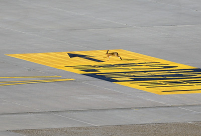 At least someone is following the new markings at Airport NUE. :-)