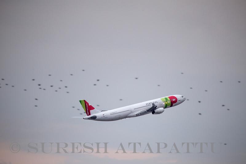 © Suresh Atapattu/ ATAPATTU.NET   suresh@atapattu.net
