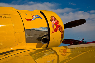 "Nose Art - North American T-6 / SNJ-4 Texan - ""Major Distraction"""