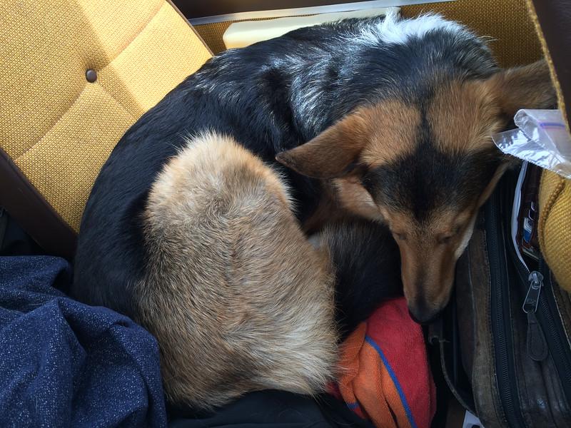 sleepy back seat passengers