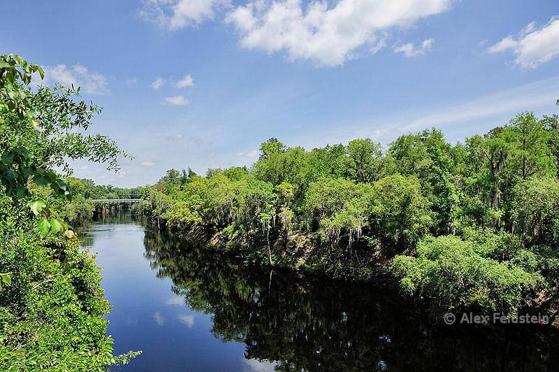 Suwannee river in North Florida